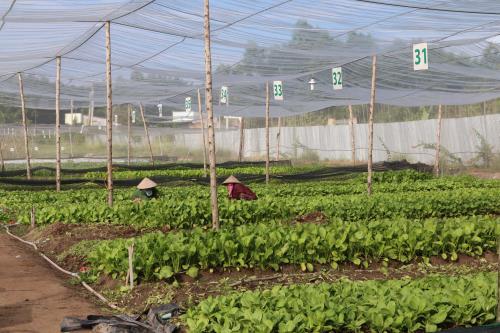 Phát động hưởng ứng Ngày Nông nghiệp hữu cơ Châu Á