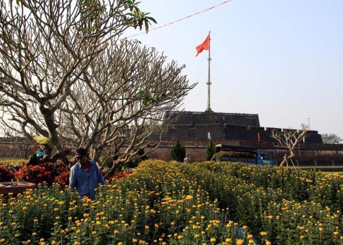 Vẻ đẹp của cây cổ thụ trong di tích Cố đô Huế