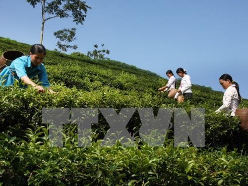 Hiệu quả bền vững từ phát triển nông nghiệp theo hướng hữu cơ