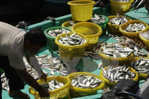 Nghệ An xây dựng các cụm chế biến hải sản tập trung. Ảnh minh họa: TTXVN