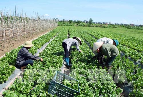 """Cơ cấu lại ngành nông nghiệp - Tháo gỡ các """"điểm nghẽn"""""""