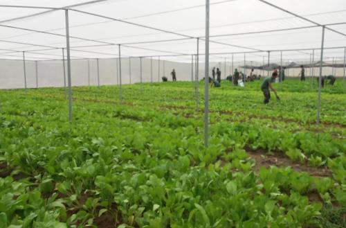 Thúc đẩy đầu tư tư nhân trong xây dựng chuỗi giá trị thực phẩm