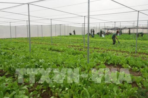 Cách mạng 4.0 trong nông nghiệp: Cách nào để phát huy lợi thế?