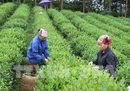 Đến năm 2020, mục tiêu có 500 hợp tác xã nông nghiệp công nghệ cao