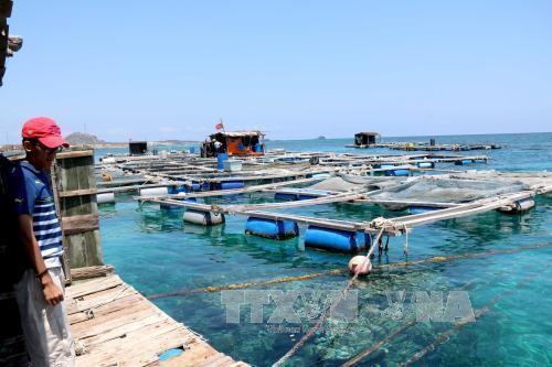 Phú Yên đầu tư trên 2.100  tỷ đồng phát triển ngành thủy sản. Ảnh: TTXVN