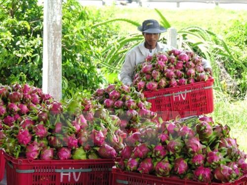 Tăng khả năng cạnh tranh cho trái cây Việt