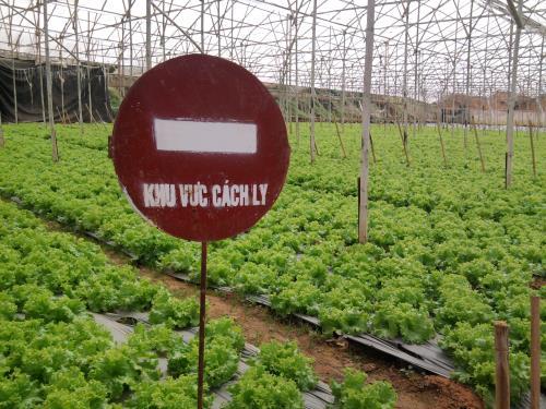"""Khởi nghiệp thành công từ trồng rau """"tử tế"""""""