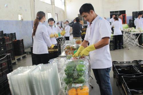 Khởi nghiệp thành công từ trồng rau 'tử tế'