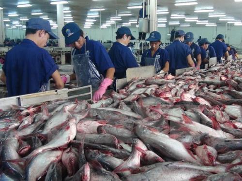 Xuất khẩu cá tra sang Mỹ vẫn tăng