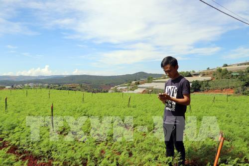Nông dân trẻ làm vườn bằng... điện thoại thông minh
