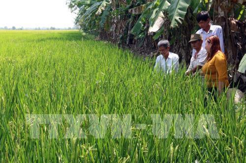 Thay đổi tư duy trong sản xuất nông nghiệp - Bài cuối: Tìm một chiến lược dài hạn