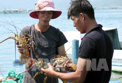Hiệu quả bước đầu trong tái cơ cấu nông nghiệp tại Phú Yên