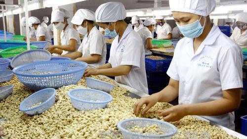 Việt Nam có phải chỉ là xưởng gia công điều thế giới?