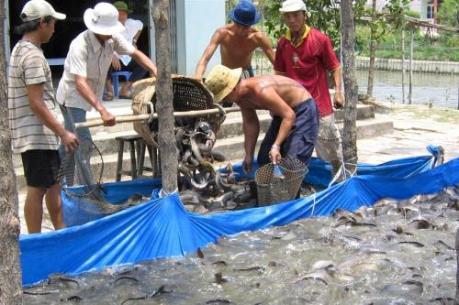 Phát triển nghề nuôi cá trên hồ Thác Bà