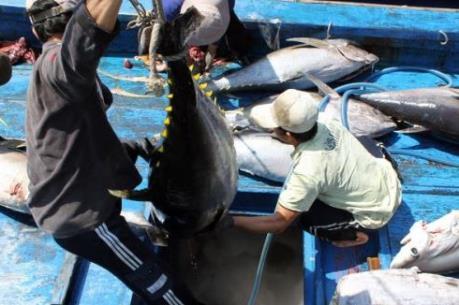 Nhật muốn đầu tư chế biến cá ngừ tại Phú Yên