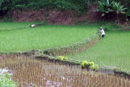 Công bố báo cáo về thay đổi trong nông thôn Việt Nam