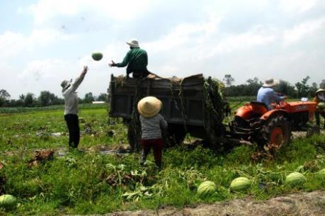 Quản lý quy hoạch nông nghiệp:  Lời giải từ thị trường