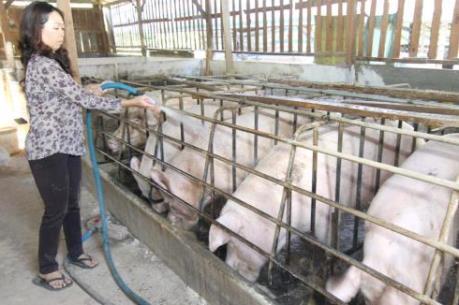 Nam Định đổi mới mô hình phát triển chăn nuôi