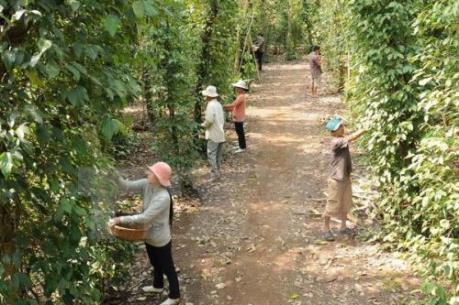 Bà Rịa-Vũng Tàu phát triển nông nghiệp công nghệ cao