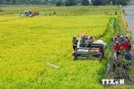 Diện tích gieo trồng vụ Đông ở phía Bắc sẽ tăng gần 5%