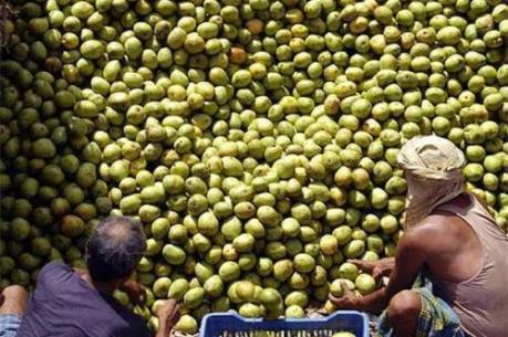 Ấn Độ lo ngại xuất khẩu bị ảnh hưởng do đồng NDT mất giá