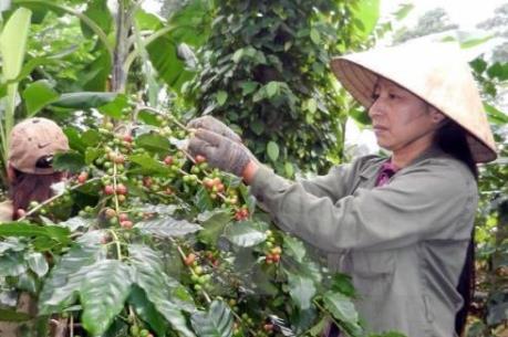 Mở rộng trồng cà phê có chứng nhận, xác nhận