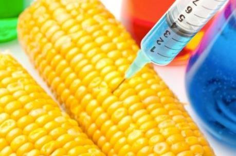 EU có thể cấm trồng cây biến đổi gien