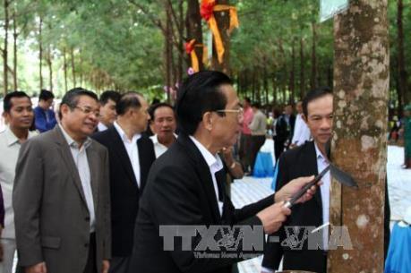 Tập đoàn Cao su Việt Nam khánh thành nhà máy tại Campuchia