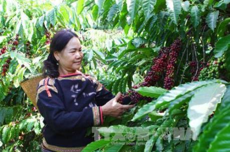 Công ty Thiên Phước phải thu hồi toàn bộ phân bón bán tại Đắk Nông