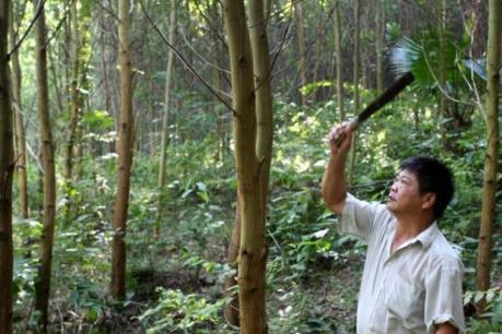 Sahabak đầu tư 1.000 tỷ đồng cho nhà máy gỗ MDF tại Bắc Kạn