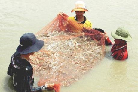 Cà Mau thiếu nguyên liệu chế biến thủy sản xuất khẩu
