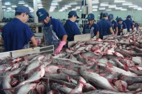 Cải thiện hình ảnh cho cá tra để ngăn đà xuất khẩu giảm sút
