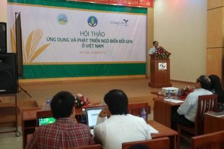 Ứng dụng và phát triển ngô biến đổi gen ở Việt Nam