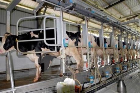 Bỉ ứng phó với khủng hoảng ngành sữa và chăn nuôi