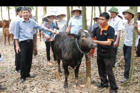 IPO Công ty Giống gia súc Hà Nội tại HNX ngày 24/9