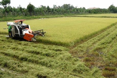 Nông dân Đồng Tháp điêu đứng vì giá lúa giảm