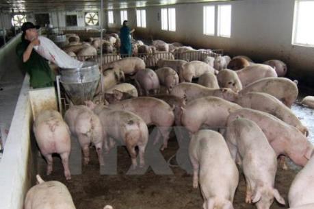 Nhiều chính sách khuyến khích phát triển kinh tế trang trại