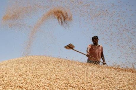 Ngô, lúa mỳ và đậu tương cùng tăng giá trong tuần qua