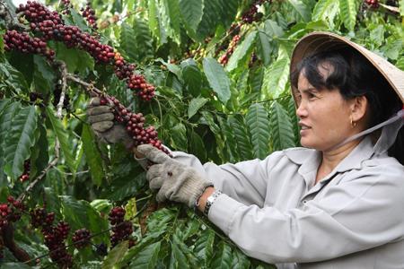 Tăng sản phẩm chế biến sâu cà phê, hồ tiêu