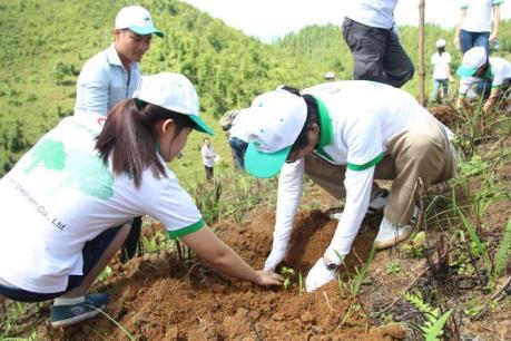 Canon tham gia trồng 50ha chè Shan Tuyết