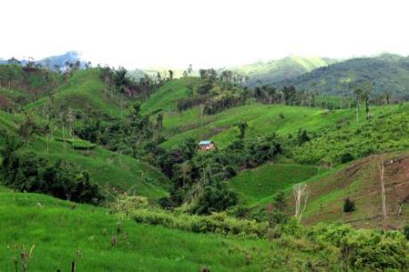 Vụ người dân mất đất do góp vốn trồng cà phê: Gỡ bỏ nút thắt