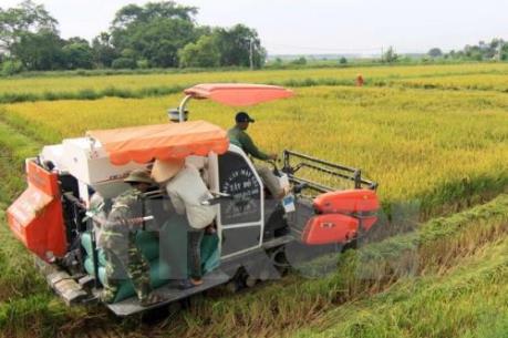 OECD: Nông nghiệp Việt Nam chuyển đổi hết sức ấn tượng