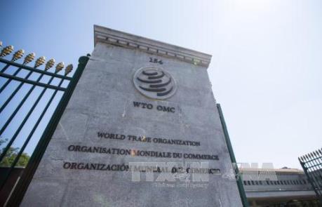 WTO hạ dự đoán tăng trưởng thương mại thế giới