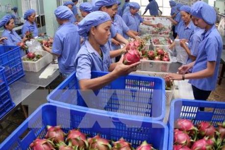 Doanh nghiệp Việt trước cơ hội từ TPP