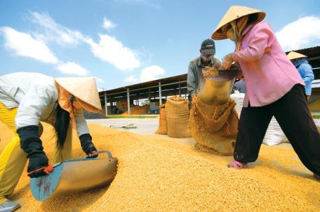 Indonesia bác thông tin sẽ nhập gần 1 triệu tấn gạo từ Việt Nam