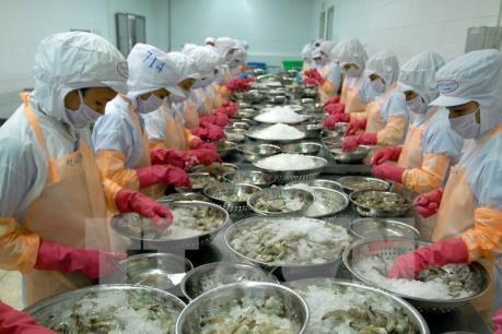 Việt Úc đầu tư 800 tỷ đồng nuôi tôm công nghệ cao