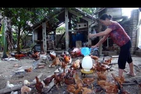 TPP tác động rõ nét đến ngành chăn nuôi Việt Nam