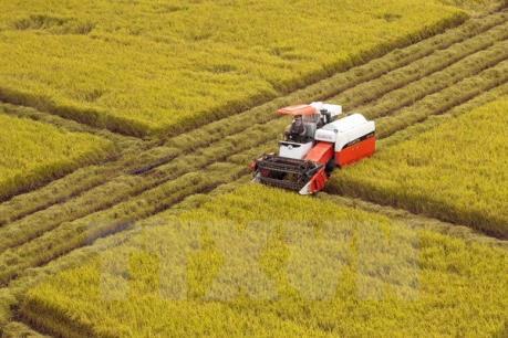 Nông dân Việt Nam sẽ hưởng lợi từ El Nino?