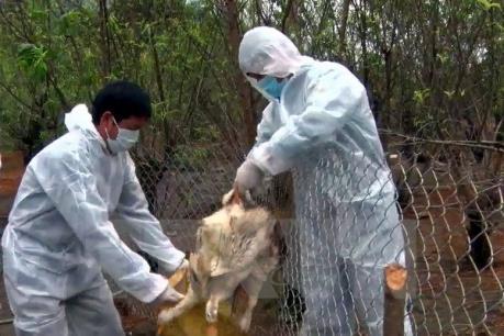 Thái Bình khống chế thành công ổ dịch cúm A/H5N6