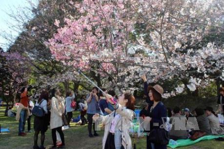 Nhật Bản ngày càng hấp dẫn du khách quốc tế